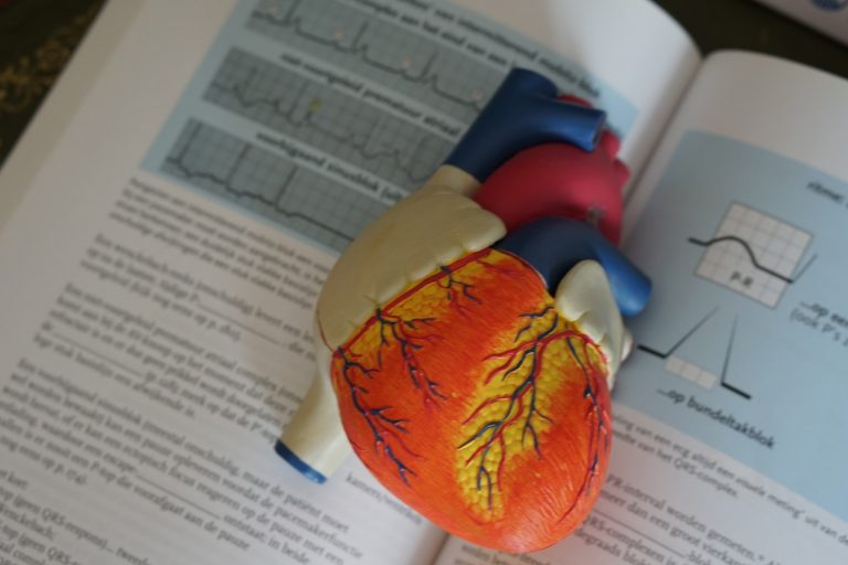 Heart model with graphs about high blood pressure
